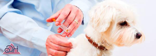 Mutuelle animaux sans franchise : Comparer les assurances animaux en 2 min