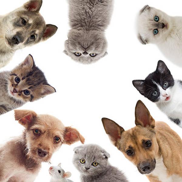 Mutuelle chat plus de 10 ans : Comparer gratuitement plusieurs offres