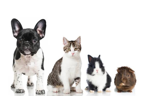 Mutuelle chien sans délai carence : Comparer les assurances animaux en 2 min