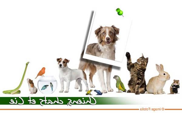 Mutuelle animaux la réunion : Faites le bon choix