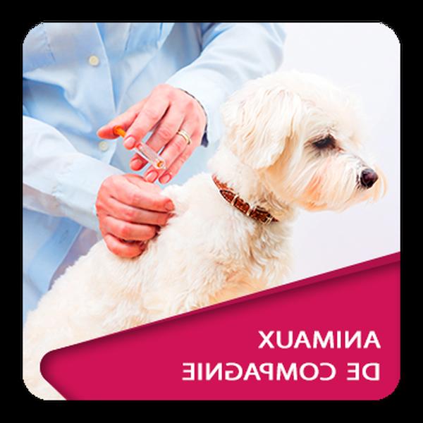 Mutuelle animaux assurance : Devis en ligne gratuit
