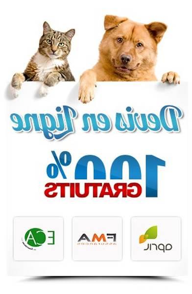 Assurance pour chien de 11 ans : Simulation gratuite