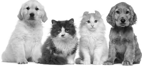 Assurance chat meilleure : Comparer gratuitement plusieurs offres