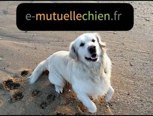 Mutuelle chien devis en ligne : Devis en ligne gratuit