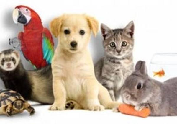 Assurance mutuelle chien : Comment bien choisir ?