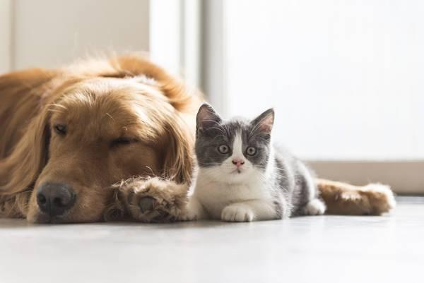 Mutuelle chat de plus de 10 ans : Comparez et simulez en 2 min