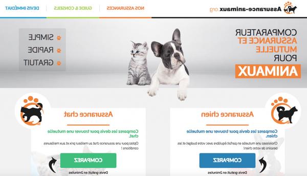 Assurance chien plus de 7 ans : Simulation gratuite