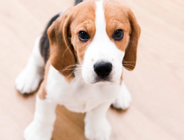 Assurance animaux meilleur taux : Comparer gratuitement plusieurs offres