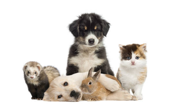 mutuelle animaux lorient