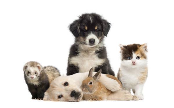 Assurance animaux sauvage : Devis en ligne gratuit