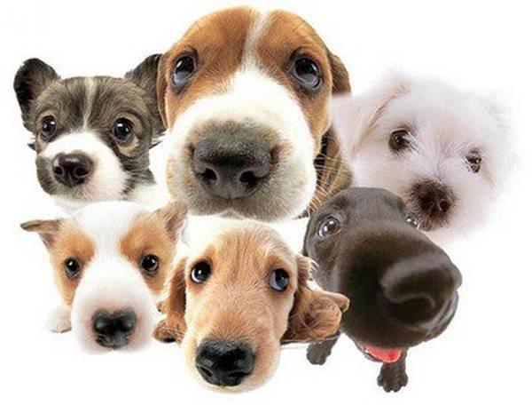 Assurance animaux plus de 8 ans : Comparez et simulez en 2 min