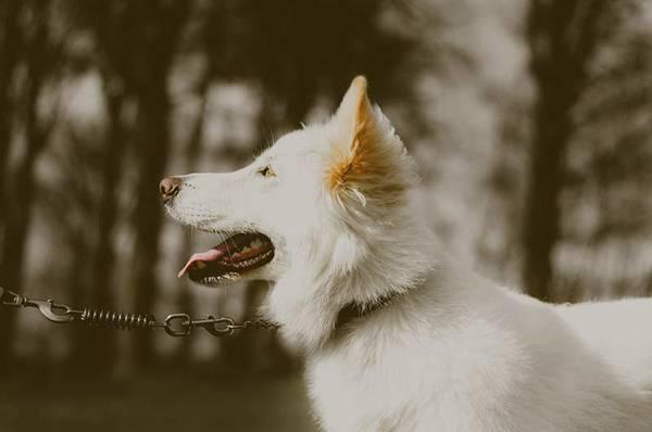 Mutuelle pour chien réunion : Simulation gratuite