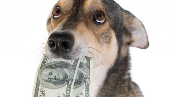 Assurance chien voiture : Faire le bon choix