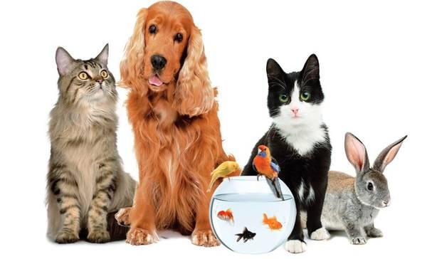 Assurance santé chien chat : Faites le bon choix