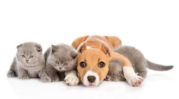 Mutuelle animaux à la réunion : Comparer les assurances animaux gratuitement
