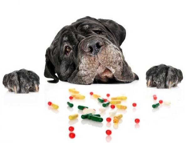 Comparatif assurance pour chien : Faites le bon choix