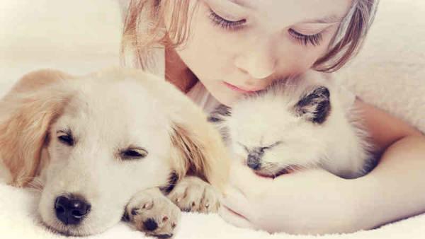 Assurance pour vieux chien : Comparer les assurances animaux en 2 min