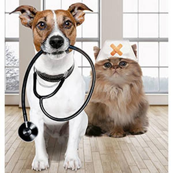 Assurance chien en cas de morsure : Comparer gratuitement plusieurs offres