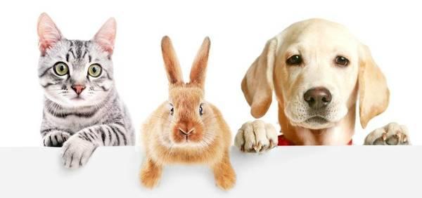 Assurance santé pour un chien : Comment bien choisir ?