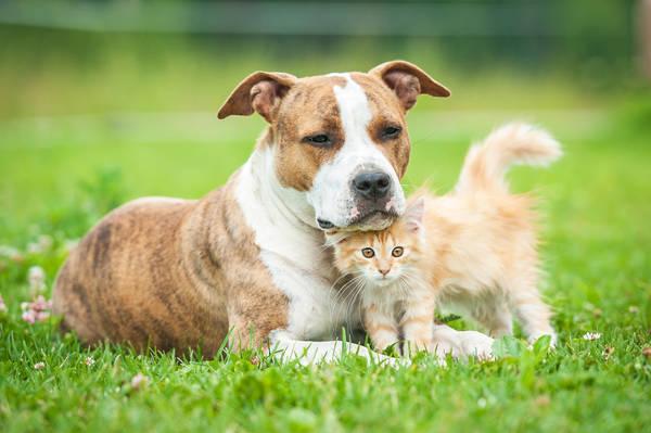 Assurance animaux devis : Devis gratuits