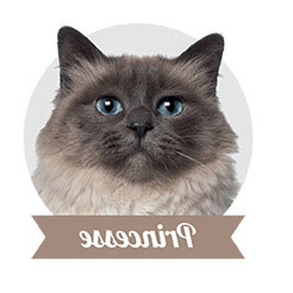 Remboursement stérilisation chat : Comparer gratuitement plusieurs offres