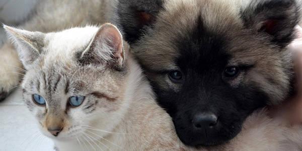 Assurance animaux rouen : Comparer les assurances animaux en 2 min