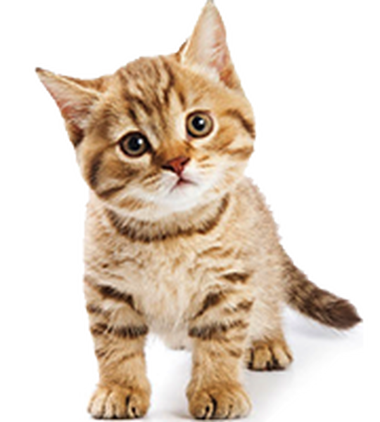 Comparateur de mutuelle pour chat : Faites le bon choix
