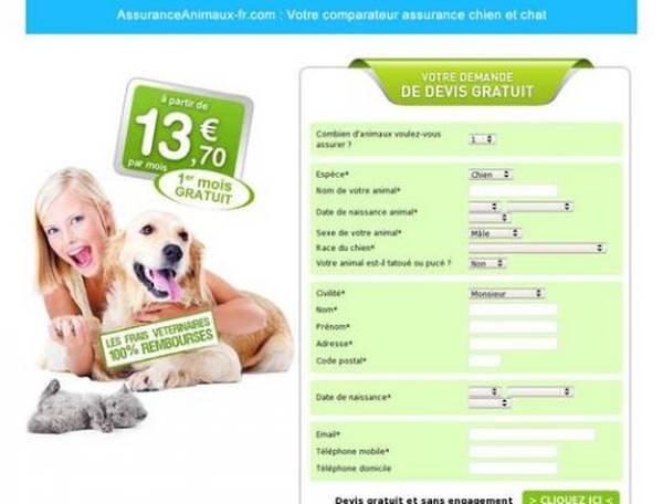 assurance animaux pour chaton