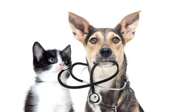 Assurance chat sans carence : Comparer gratuitement plusieurs offres