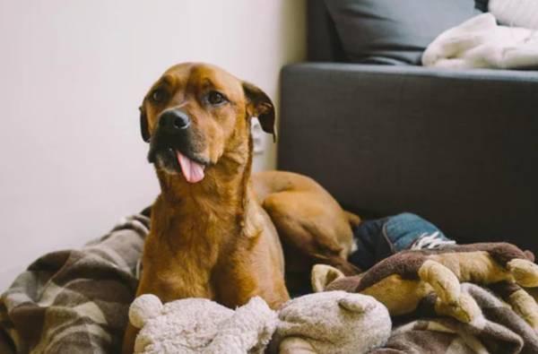 Meilleure assurance animaux : Comparer les assurances animaux en 2 min