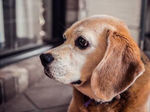 Assurance animaux ile de la réunion : Comparer les assurances animaux gratuitement