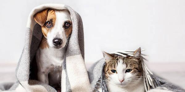 Assurance animaux à la réunion : Comment faire le bon choix ?
