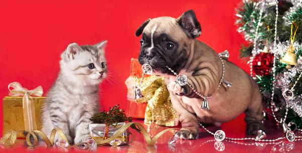 Assurance chien 3 ans : Devis en ligne gratuit