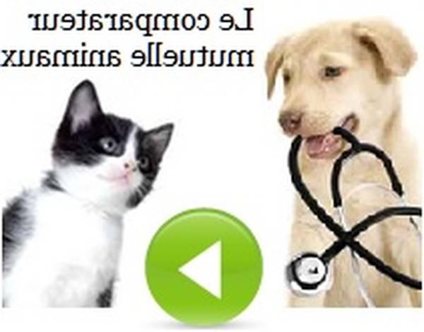 Assurance tiers animal sauvage : Faire le bon choix
