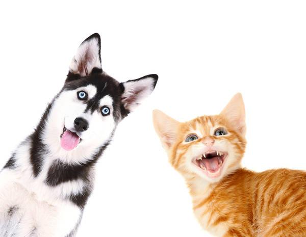 Assurance pour chien ile de la réunion : Devis en ligne gratuit