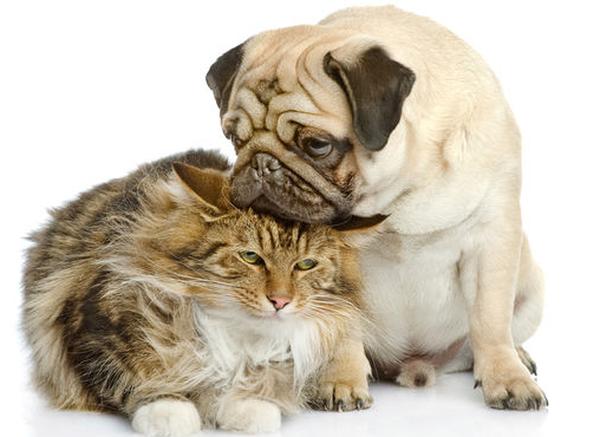 assurance chat blessé
