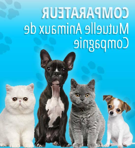Assurance mutuelle animaux de compagnie : Comparer gratuitement plusieurs offres