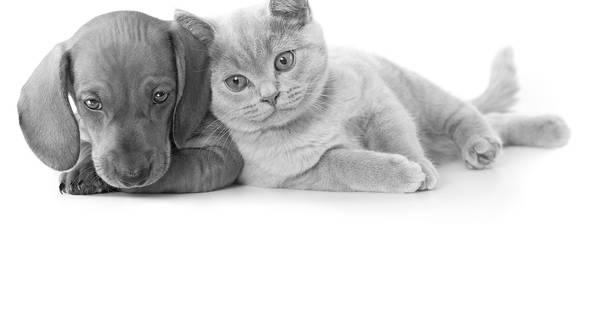Assurance chien chat mutuelle : Devis en ligne gratuit