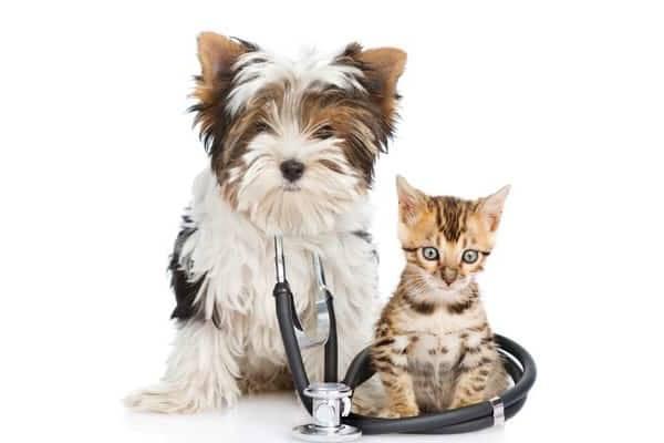 Mutuelle animaux clermont-ferrand : Comparer les assurances animaux en 2 min