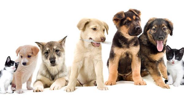Comparateur prix assurance pour chien : Faire le bon choix