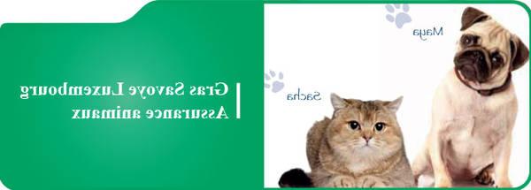 Assurance chien plus de 9 ans : Devis gratuit personnalisé