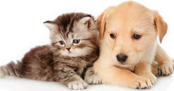 Mutuelle animaux devis en ligne : Comparer les assurances animaux en 2 min