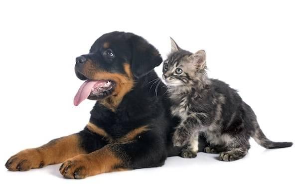 Mutuelle chien comparateur : Comment bien choisir ?