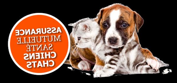 Assurance chien moins cher : Devis en ligne gratuit