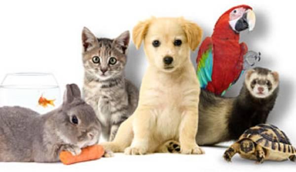 Assurance chien de chasse pas cher : Comment bien choisir ?